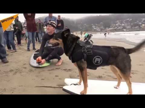 Norcal World Dog Surfing Championship awes San Francisco Bay Area